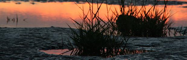 Wattenmeer.jpg